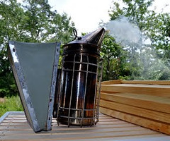 carrieleeschwartz03web (Carrie Lee Schwartz) Tags: bees honey pollen risd beekeeping beehives camellias beeswax pollinators carrielee carrieleeschwartz selabees vogthorstarhttploveblessedlightblogspotcom risdgrad