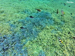 (Moson Kuo) Tags: travel fish seascape beautiful landscape boats amazing nikon scenery honeymoon diving spa ultrawide palau      2014 koror      jellyfishlake   gopro hero3        palauroyalresort  longrainbow   d800e  afs1424mm28g