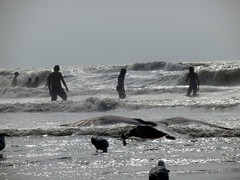 At the Beach (Quetzalcoatl002) Tags: seagulls beach birds waves scheveningen northsea bathing swimmers