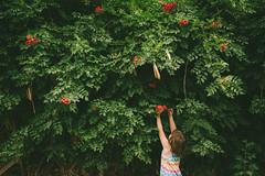 flower picking good (demanda