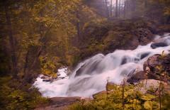 wonderland (emm.dsign) Tags: wood autumn summer mountain alps green nature colors berg schweiz nice nikon swiss natur fluss enchanted farben mrchen verwunschen colorprocessing emmdsign tonefading