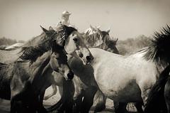 Saca #4 (Mathias Bra) Tags: horses caballos