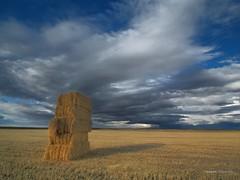 Alpacas en el rastrojo (anpegom) Tags: valladolid nubes verano tormenta paja alpacas pacas paramo castillaylen rastrojo velliza anpegom