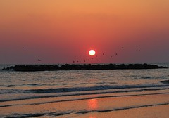 il volo all'alba tra sole mare e scogli - Cesano di Senigallia (walterino1962) Tags: mare ombre luci sole riflessi gabbiani onde ancona scogli cesanodisenigallia