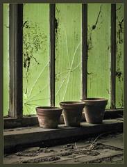 IMG_3381-1 - Empty (dangle earrings) Tags: brokenglass greenhouse claypots derilect dangleearings websdustdirt