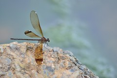 Another dragonfly (Juanfra M.) Tags: blue sky brown cute verde beautiful rio rock river flying wings rocks dragonfly libelula alas marron takeoff roca volando volar