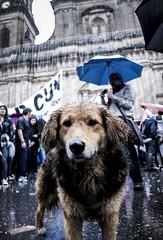 310236_10150400215450839_901495059_n_1 (Manuel D Sánchez) Tags: dogs perros dogos
