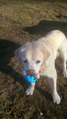 Maxxie (missjessicab) Tags: park dogs maxxie