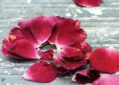 Ladder  sprinkled with rose petals (kaffealskare) Tags: rose ladder rosepetals stege rosblad