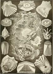 Anglų lietuvių žodynas. Žodis snipefish reiškia <li>snipefish</li> lietuviškai.
