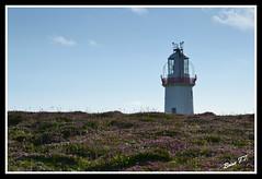 DSC_8266 loophead lighthouse (Up_the_Bridge) Tags: ireland light lighthouse tourism clare heather wildlife eire cliffs atlantic dolphins bog birdwatch kilkee irishlights loophead kilbaha loopheadlighthouse wildatlanticway