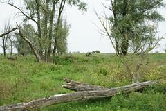 DSC06385 (Ton Smilde) Tags: oostvaardersplassen naturereserveinthenetherlands