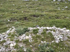 Bergmarmot (ericderedelijkheid) Tags: snp dolomieten