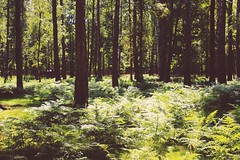 Bizon's national Park (parchedwings) Tags: park summer tree green forest russia moscow national area bison tasha metamorfosis   tmetamorfosis tashametamorfosis  tashametamorphosis tmetamorphosis