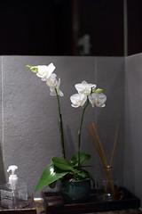 rchid (Alfred Life) Tags: leica blackandwhite bw home 50mm shanghai f10 noctilux mm monochrom    noctilux50mmf10  mmonochrom leicammonochrom noctilux50mmf10v4