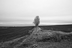 Blomidon, Canada (bm^) Tags: ca travel trees sea bw white house canada black tree nova zeiss t nikon novascotia zwartwit photos reis zee shore valley carl and annapolis scotia zwart wit 228 kust mre distagon 282 zf d700 zf2 nikond700  distagon282zf distagont228
