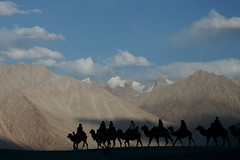 Camel by Camel (glucamorettini) Tags: dune ombre ladakh cammelli nordindia