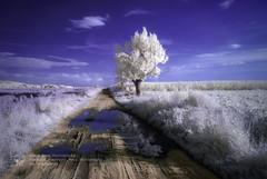 IRenkowo (Piotr.Krol) Tags: trees ir piotr poland infrared bax krol baxteria lowersilesia