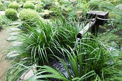 (GenJapan1986) Tags: japan garden temple kyoto  25mm sanzenin 2014      nikond600  zf2 distagont225