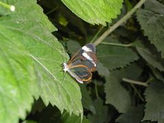 2008-10-18 Tropical Wings _57 (Velda Tiger Lily Varney) Tags: camera pentax compact cameraequipment pentaxoptiol30 brandmain
