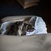 sleeping beauty : milo