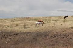 Content horses