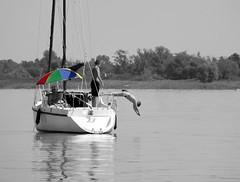 Joy (vegeta25) Tags: blue red summer lake holiday green yellow fun boat jump jumping fuji fujifilm 37 selective myfuji s3200 114picturesin2014