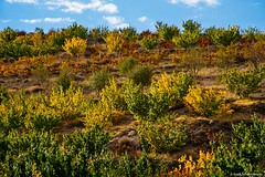 Autumn of the orchard. (Hayk Senekerimyan) Tags: bridge blue autumn red sky orange cloud house tree green fall grass leaves yellow river bush wind orchard canyon armenia apricot birch grape jermuk