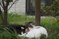 DSC03508 (Clearchild) Tags: cats cat kitten kitty kittens kitties