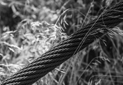 Cable ascends into darkness (maytag97) Tags: maytag97 cable dry grass dried bw blackandwhite contrast shadow closeup outdoor bokeh