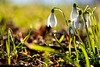S p r i n g (stefan.bayer) Tags: sb spring white s p r n g green flower