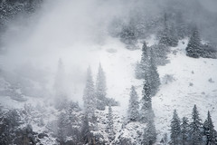 weather update (Karin Ziegler) Tags: fog mist nature forest tree styria austria österreich nikon d810 steiermark snow winter storm