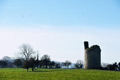 The Tower (Marta Marcato) Tags: tower ireland irlanda green blue sky grass birds rural day torre verde blu cielo erba uccelli campagna giorno nikond7200 nikon