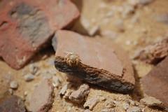 Pottery Shards - Fayoum Oasis (gilmorem76) Tags: travel tourism egypt fayoum lake qaroun oasis ancient ceramic pottery shards