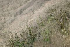 1JAC3229_exmoor_170313 (_husky_) Tags: devon exmoor exmoornationalpark fuji50140 fujixt1 nationaltrust somerset watersmeet