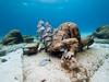 Sailors Choice for The Banker (altsaint) Tags: 714mm banker gf1 islamujeres jasondecairestaylor musa mexico panasonic underwater