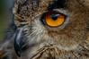 DSC_0260 (Steve_McCaul) Tags: beginnerdigitalphotographychallengewinner