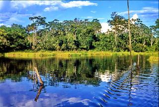 Amazonas Jungle