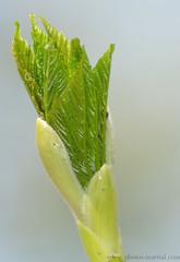 Feuillaison (kahem54) Tags: feuillaison feuille arbre branche printemps bourgeon nikond5200 tamron70300 nature vert jaune bokeh closeup