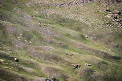 Plains (joshhansenmillenium) Tags: nikon photography d5500 hiking adventure nature utah salt lake city antelope island sunset moon animals coyotes buffalo bison mountains tamron 18200mm frary peak great