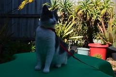 DSC_0484 (loisshea) Tags: cats cat kitten animals pets sleep nap relax sunshine sun autmn outdoor explore