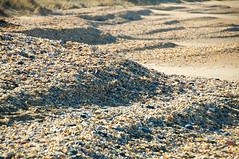 Millions of Shells (kieranburgess) Tags: sea shells dunes large australia number tasmania mounds piles eastcoast ridges quantity