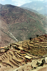 21-229 (ndpa / s. lundeen, archivist) Tags: nepal houses house mountain mountains color building film rural 35mm buildings landscape village 21 nick hill terraces hills mountainside nepalese thatchedroof 1970s hillside 1972 himalayas nepali dwellings dwelling dewolf terraced mountainvillage thatchroof ruralvillage terracefarming nickdewolf photographbynickdewolf ruraldwellings terracedhillside ruralnepal terracedfarmland reel21 hillyregion terracedmountainside