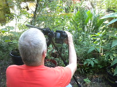 a real photographer in my garden (Just Back) Tags: lamiaceae labiatae botany flowers garden stachys red shirt man backyard columbia sc carolina camera view image scene science taxonomy lamioideae hair summer picture botanist woundwort jardin newspecies