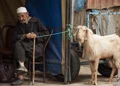 Man Who Stares.. (ronan1) Tags: man goat morocco staring chefchaouen