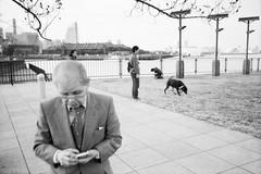 * (Sakulchai Sikitikul) Tags: street leica bw dog film japan 35mm streetphotography summicron yokohama ttl m6 asph 085 yokohamainternationalportterminal