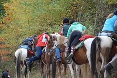 DSC_0080 (wollstrumpf77) Tags: horse socks high riding strip argyle knee reiten reitsocken