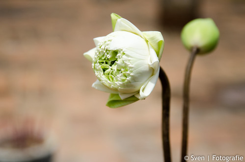 Offer bloem