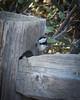 Mama Bird (cwhenderson) Tags: yosemite gatesofthevalley