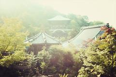 Miyajima + Daisho-in temple | Japan, July 2014 (Sebastien BERTRAND) Tags: japan canon streetphotography streetphoto japon daishoin  photoderue daishointemple myajima eos40d canon40d fotomato sebfotomato sbastienbertrand sebastienbertrand templedaishoin